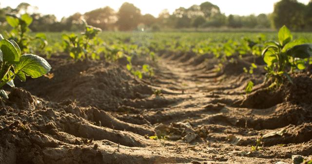 Channel Strategy to Take Soil Amendment Brand Holganix to Market