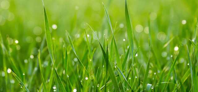 Positioning Strategy for the Highly Competitive Grass Seed Category